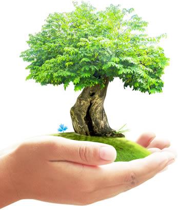 mani-albero